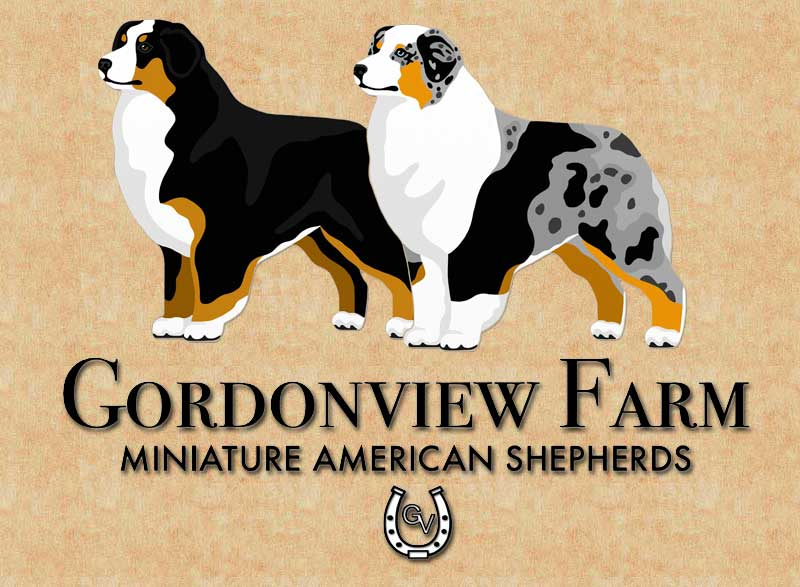Gordonview Farm Mini Aussies